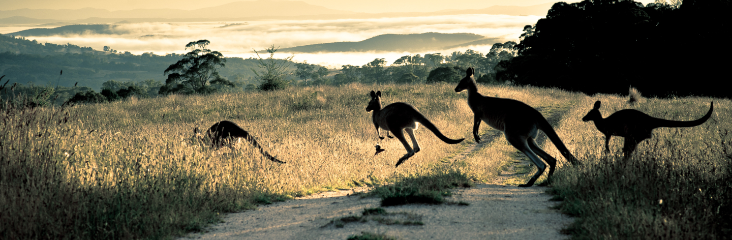 http://Scattering%20Rays,%20Roos%20And%20Rosella